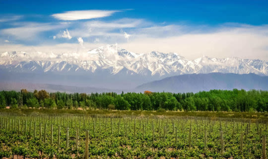 organic vineyard and andes mountains
