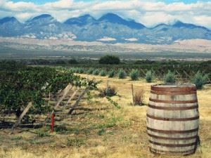Chile and Argentina Wine Tours