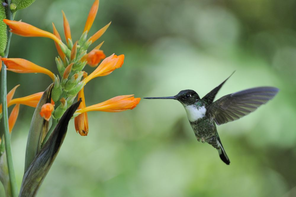Amazon Tours Peru hummingbird