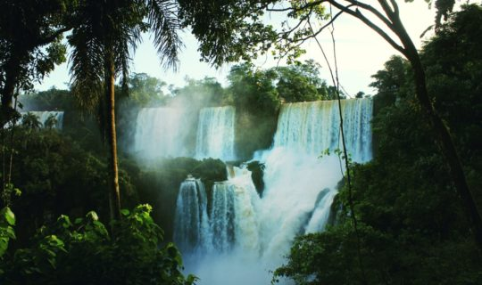 iguazu-falls-from-trees-covered-in-mist