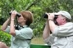 Amazon Rainforest Birdwatching