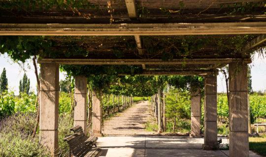 Beautiful wine tour in Mendoza