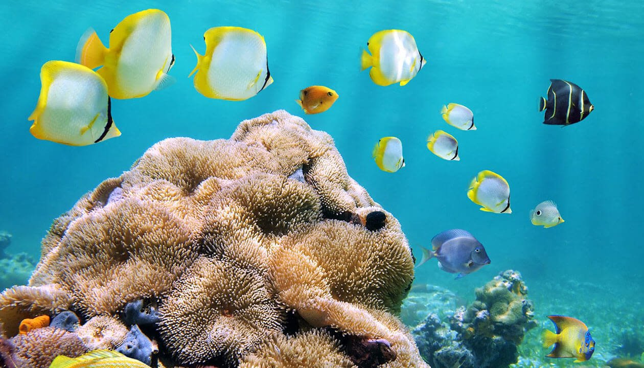 tropical fish caribbean sea