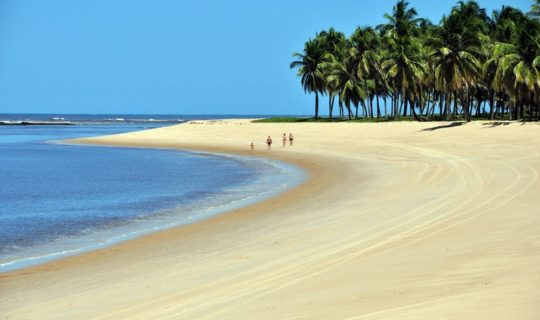 people-walking-on-remote-beach-lined-with-palm-trees