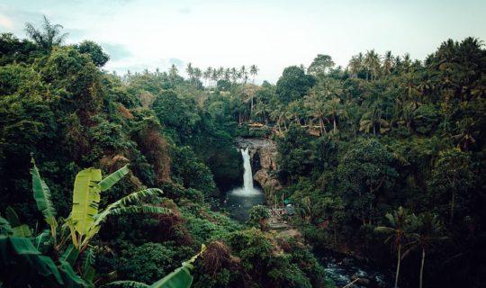 small-waterfall-in-dense-Amazon-jungle