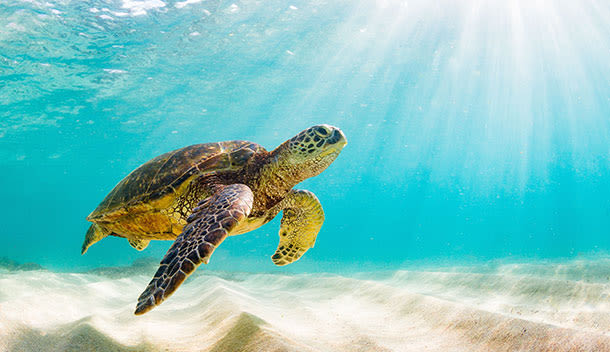 sea turtle swimming near the ocean floor
