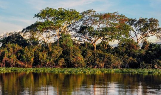 dense-jungle-of-the-pantanal-over-river
