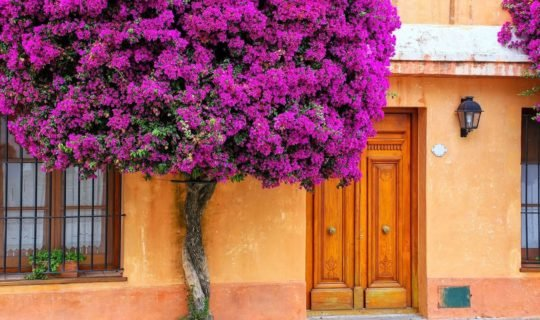 quaint-argentina-house-with-purple-flowers-on-facade