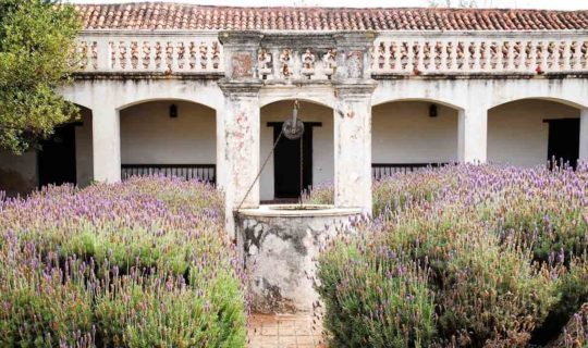 old-building-with-lavender-out-front