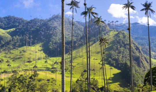colombia-coffee-region-with-the-world's-tallest-palm-trees