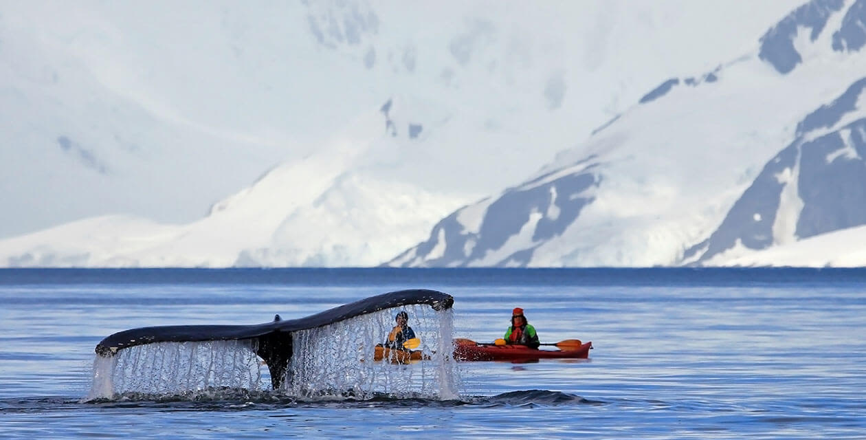 two kayakers looking at whale's fin