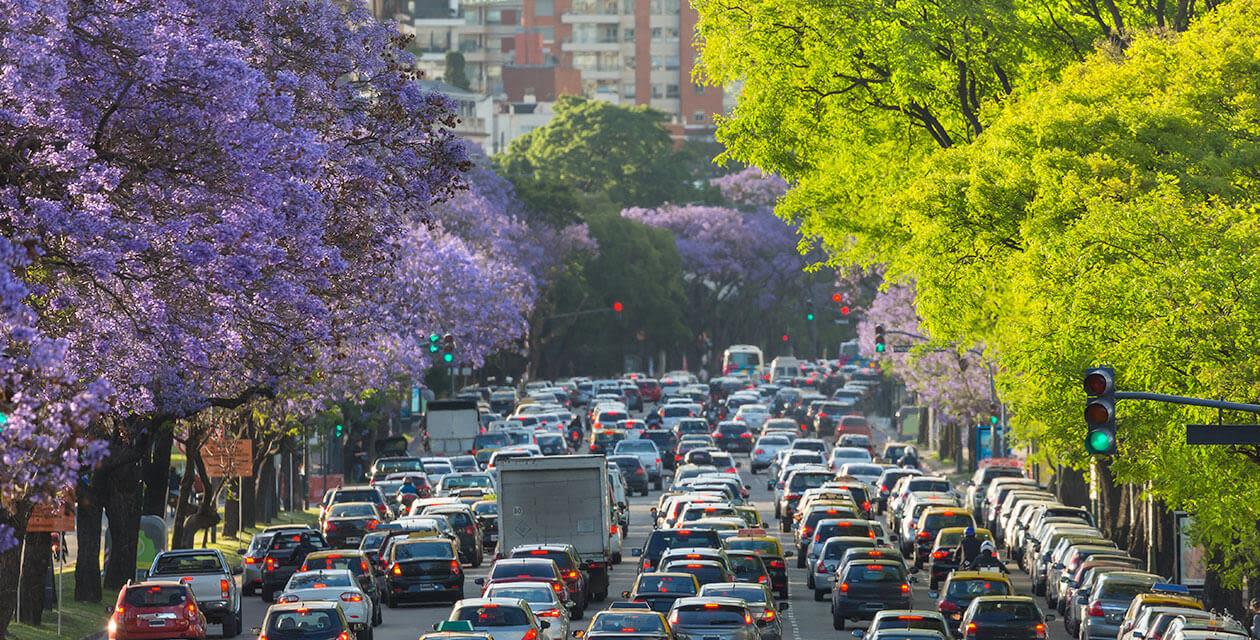 jacaranda trees in buenos aires argentina