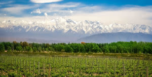 Andes scenery on mendoza winery