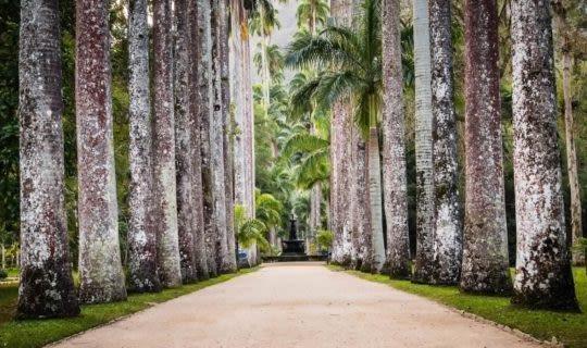 palm-tree-lined-path-in-rio-de-janeiro