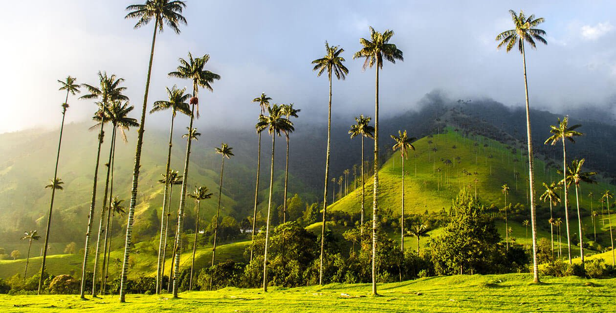 the green valleys of colombia's coffee region with palm trees
