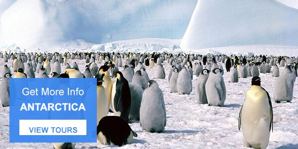 Penguins in South America