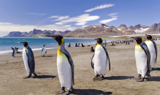 penguins-in-walking-on-beach-south-america