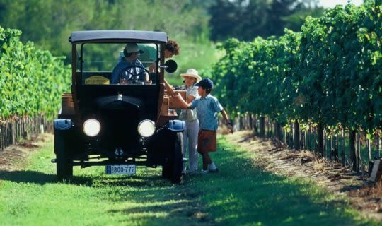 uruguay-wine-tour-in-vintage-car-through-grape-vines