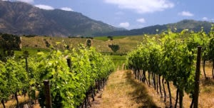 Distant hills and scenic vineyard