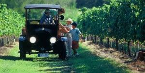 People enjoying sunny day at vineyard