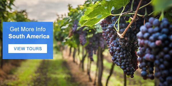 South America Wine Tours