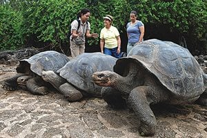 Tortoise Reserve - Galapagos Legend Cruise