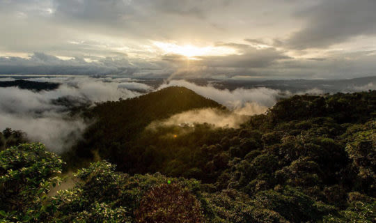 ecuador's-cloud-forest