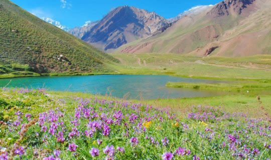 mendoza-field-and-lake-surrounded-by-wildflowers