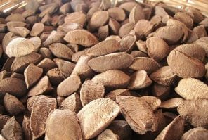 An image of Brazil Nuts, as part of a post about Bolivia Top Facts