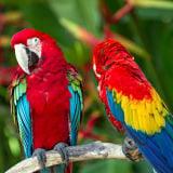 Amazon Rainforest Tour & Vacation Packages