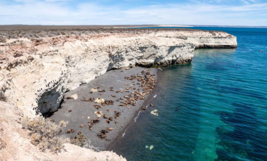 Puerto Madryn coast, with wildlife on beaches