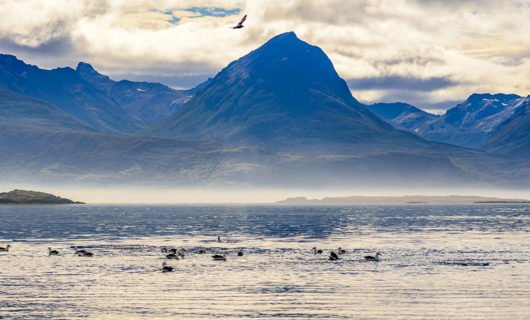 Beagle Channel under morning fog with birds flying around
