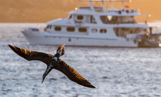 Galapagos Cruise sailing during sunset