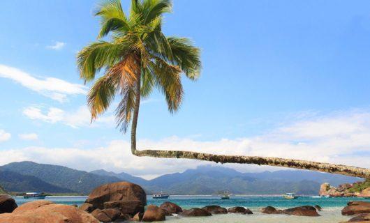Ilha Grande beach with unique bent palm tree
