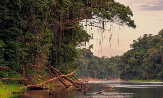 Rainforest outside Manaus center