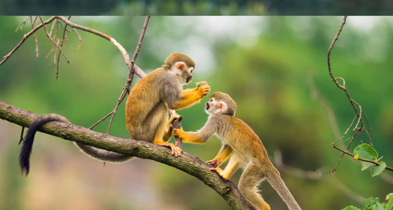 monkeys playing in tree