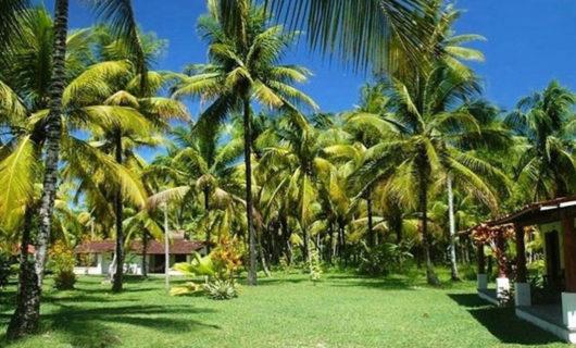 serene outdoor area in Vila Guaiamu Bahia Brazil Beach Resort