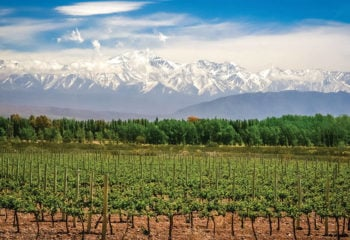 Landscape of a vineyard in Mendoza Argentina