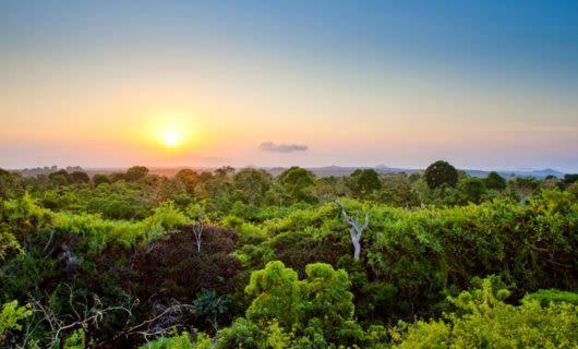 View across top of Amazon rainforest