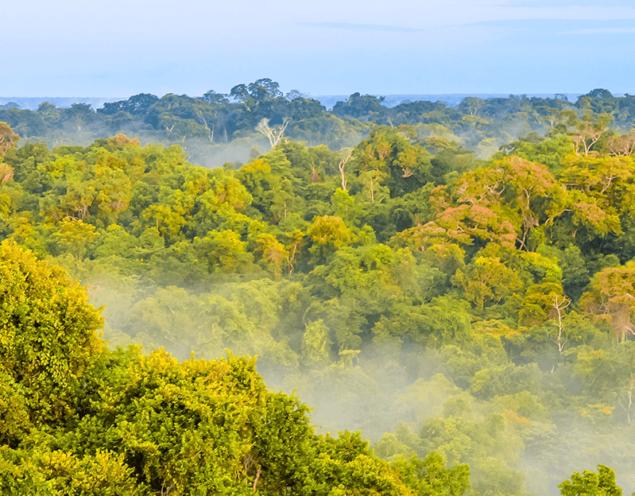 amazon-horizon-with-tree-tops