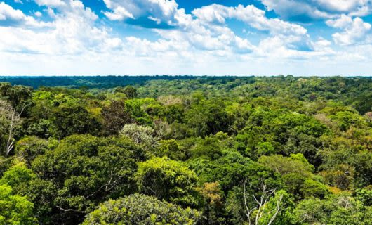 Aerial view of treetops in Amazon jungle
