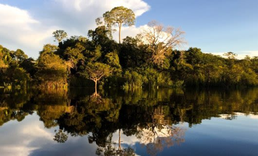 Forest reflected in Amazon river