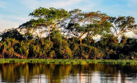 Bank of Amazon river at evening