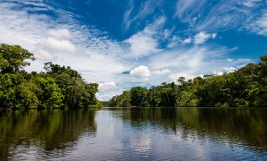 Wide view of Amazon river and forested banks