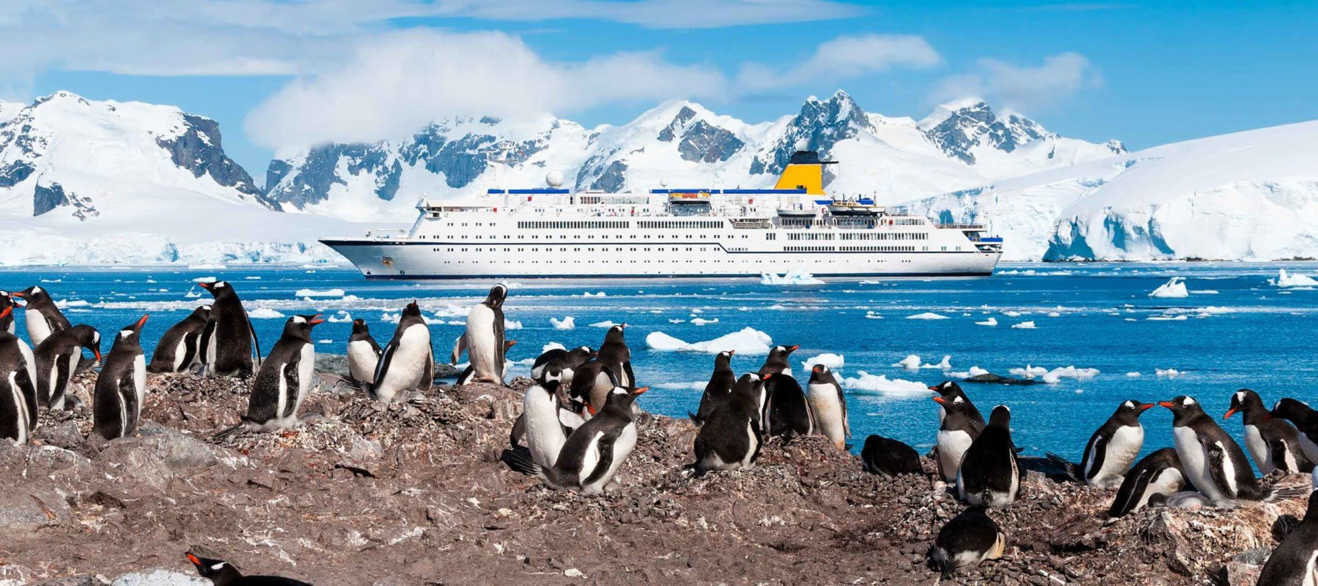 Penguins stand on shore waiting to get back on their ship for their Antarctica Cruise. near Antarctica cruise boat