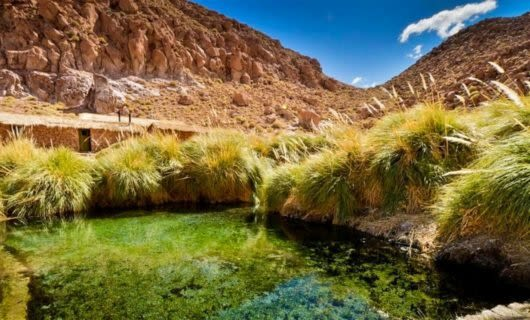Water surrounded by grass in Atacama desert