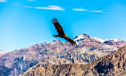 Large bird flies over mountains