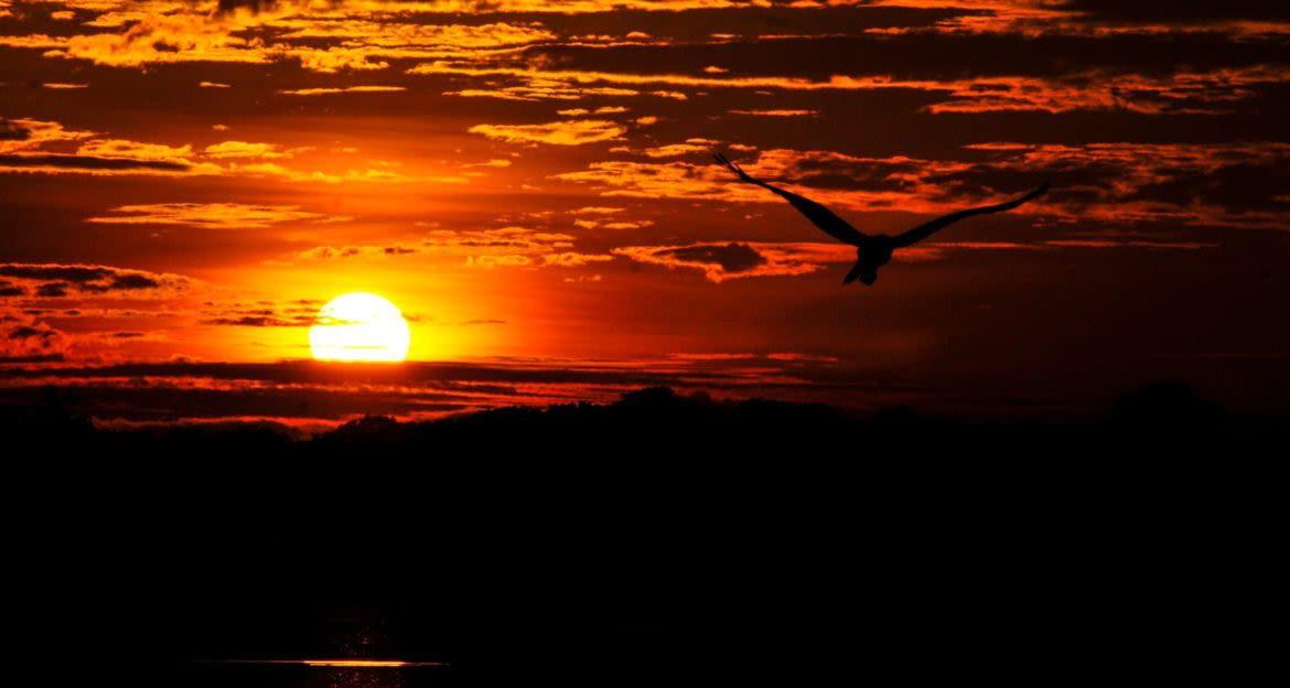 Bird flies out of dark red sunset