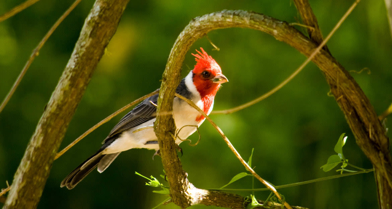 Small bird sits under loop of vine