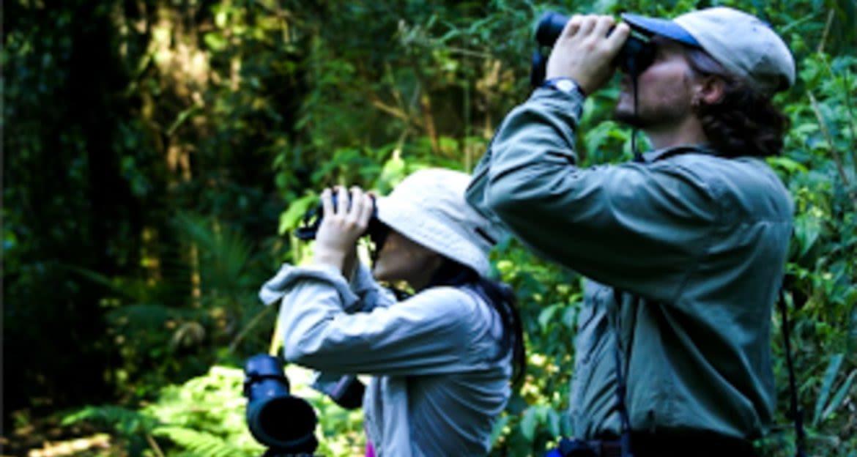 Travelers use binoculars to watch birds in jungle